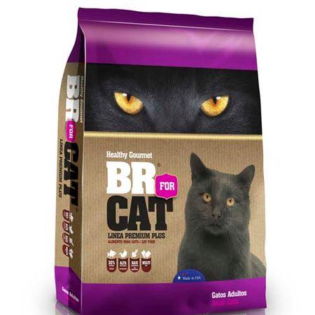 BR4CATS-SENIOR-CATS-