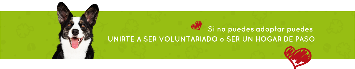Banner Voluntarios