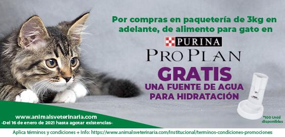 Comida para gatos PROPLAN  - Promocion Fuente de agua