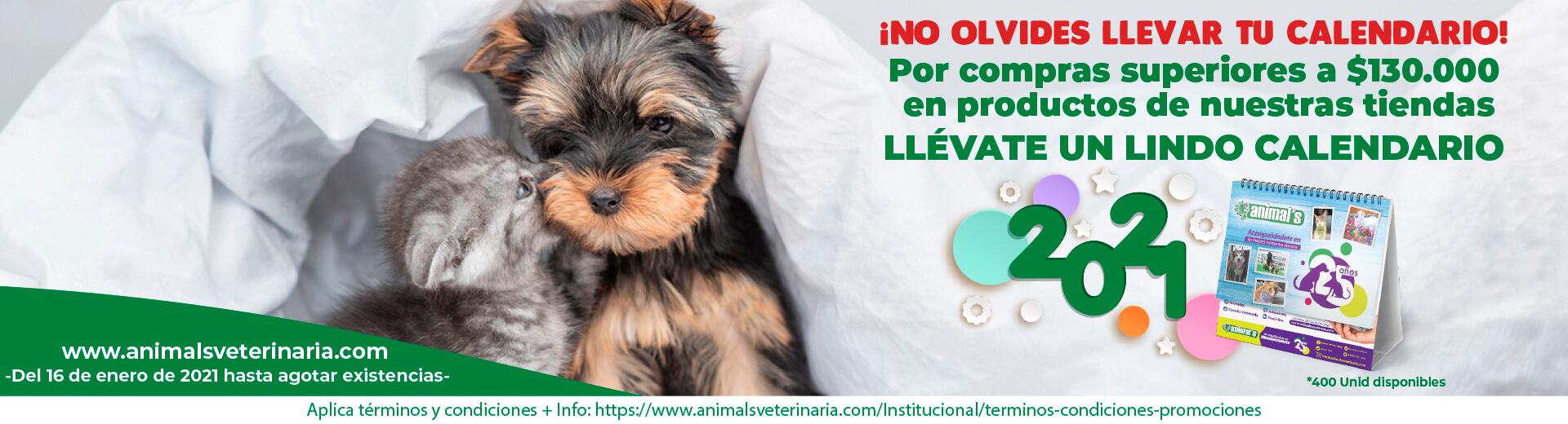 comprar alimento para perros y gatos - CALENDARIO